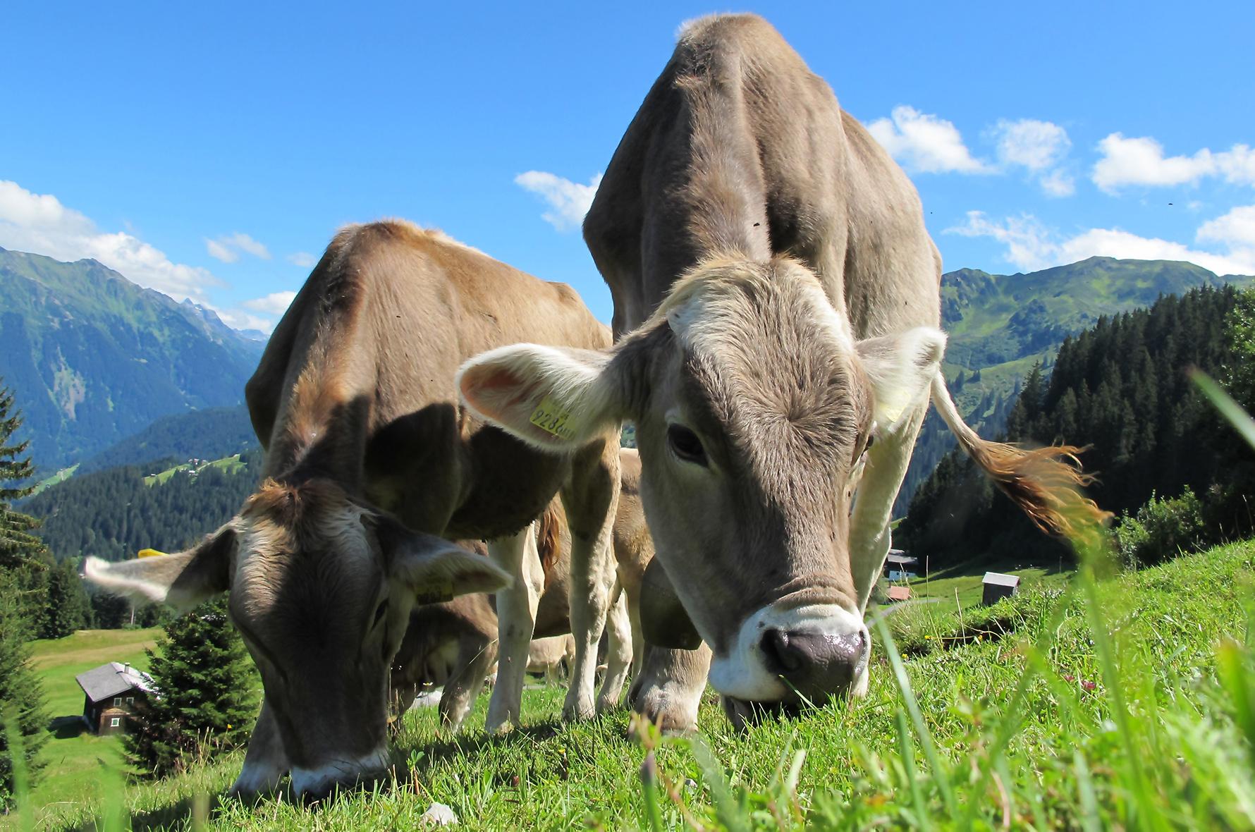 Global methane emissions reach record high